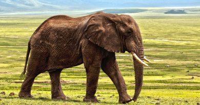 Comment se passe la migration des animaux dans le Serengeti National Park ?
